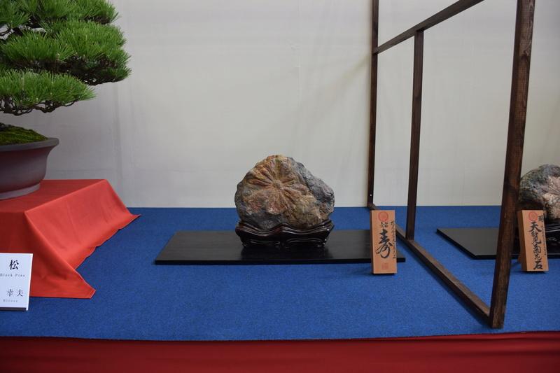 The 8th World Bonsai Convention, SAITAMA CITY - Page 2 Dsc_0404
