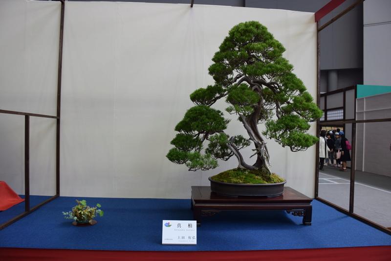 The 8th World Bonsai Convention, SAITAMA CITY - Page 2 Dsc_0406