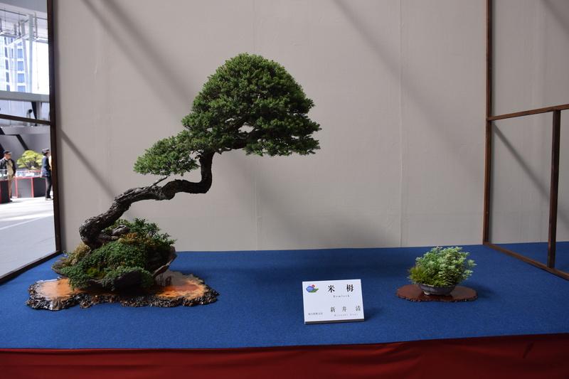 The 8th World Bonsai Convention, SAITAMA CITY - Page 2 Dsc_0407