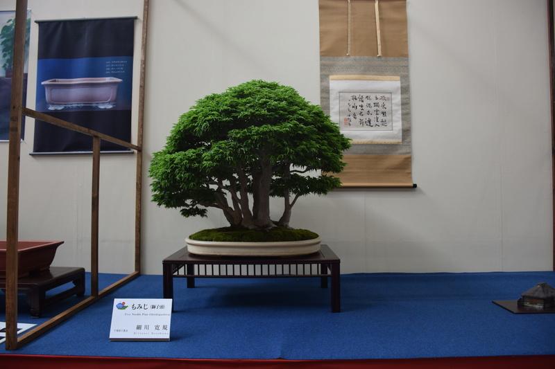 The 8th World Bonsai Convention, SAITAMA CITY - Page 2 Dsc_0467