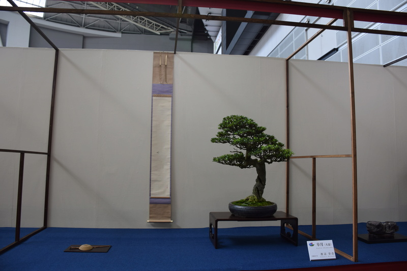 The 8th World Bonsai Convention, SAITAMA CITY - Page 2 Dsc_0468