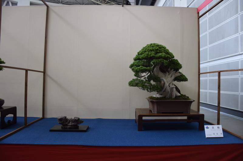 The 8th World Bonsai Convention, SAITAMA CITY - Page 2 Dsc_0469