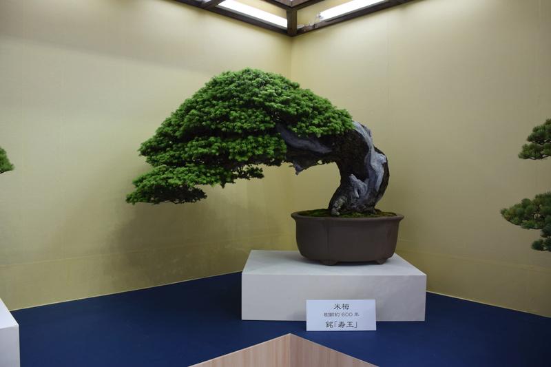 The 8th World Bonsai Convention, SAITAMA CITY - Page 2 Dsc_0493