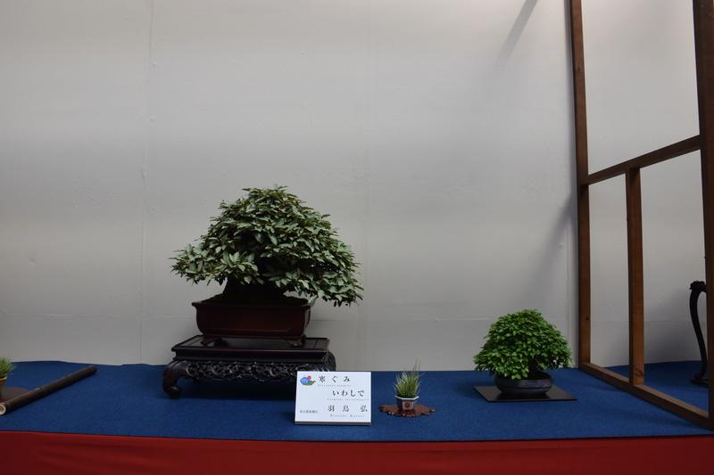 The 8th World Bonsai Convention, SAITAMA CITY - Page 2 Dsc_0590