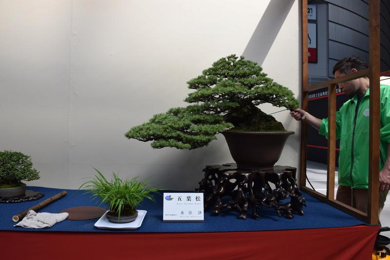 The 8th World Bonsai Convention, SAITAMA CITY - Page 2 Dsc_0593