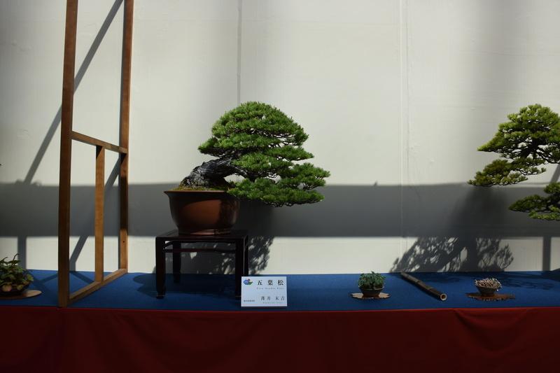 The 8th World Bonsai Convention, SAITAMA CITY - Page 2 Dsc_0594