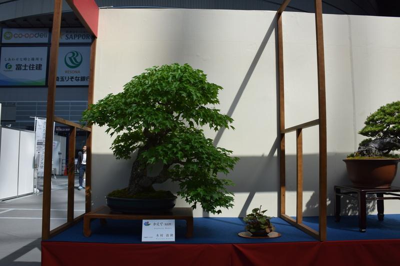The 8th World Bonsai Convention, SAITAMA CITY - Page 2 Dsc_0596