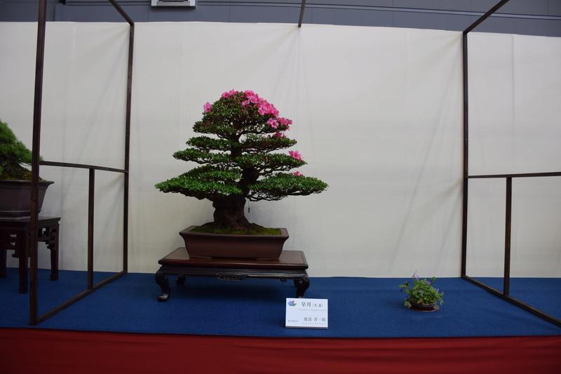 The 8th World Bonsai Convention, SAITAMA CITY - Page 2 Dsc_0678