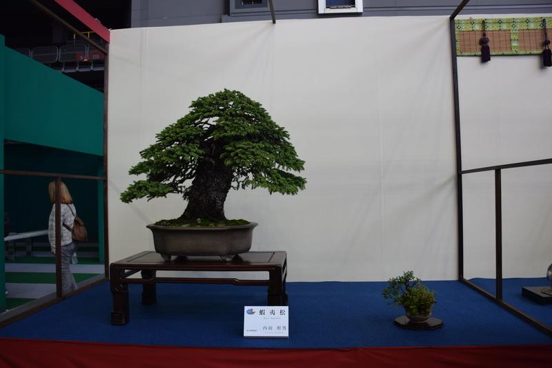 The 8th World Bonsai Convention, SAITAMA CITY - Page 2 Dsc_0680