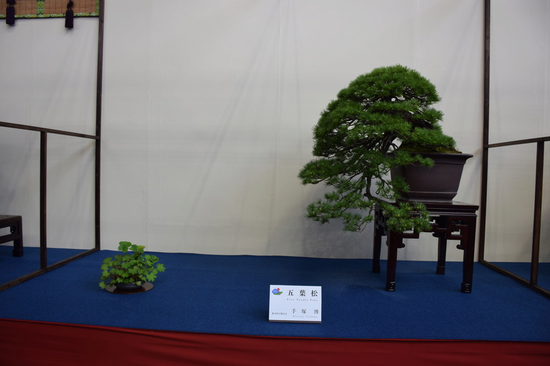 The 8th World Bonsai Convention, SAITAMA CITY - Page 2 Dsc_0681
