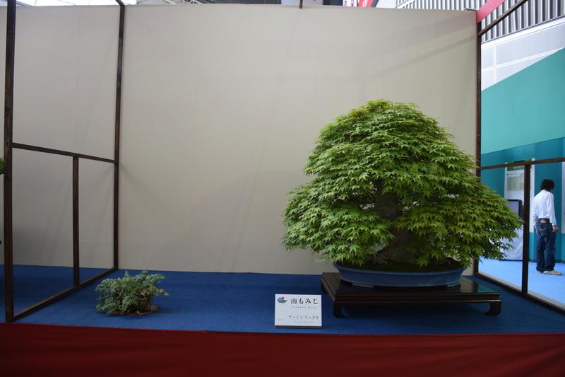 The 8th World Bonsai Convention, SAITAMA CITY - Page 2 Dsc_0682