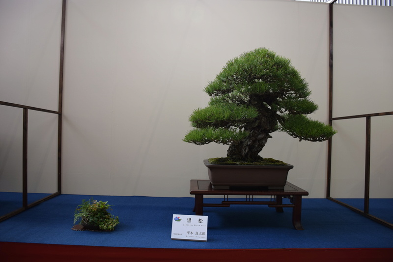 The 8th World Bonsai Convention, SAITAMA CITY - Page 2 Dsc_0683