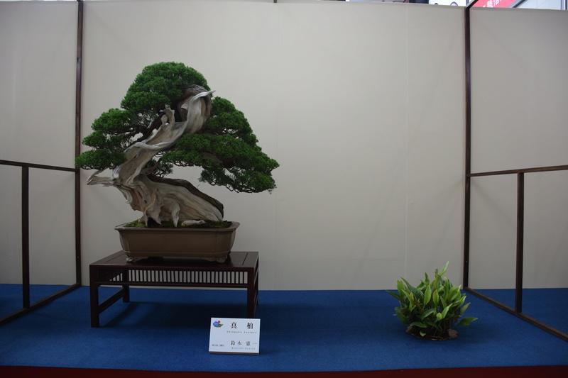 The 8th World Bonsai Convention, SAITAMA CITY - Page 2 Dsc_0684