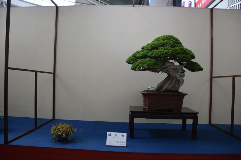 The 8th World Bonsai Convention, SAITAMA CITY - Page 2 Dsc_0686