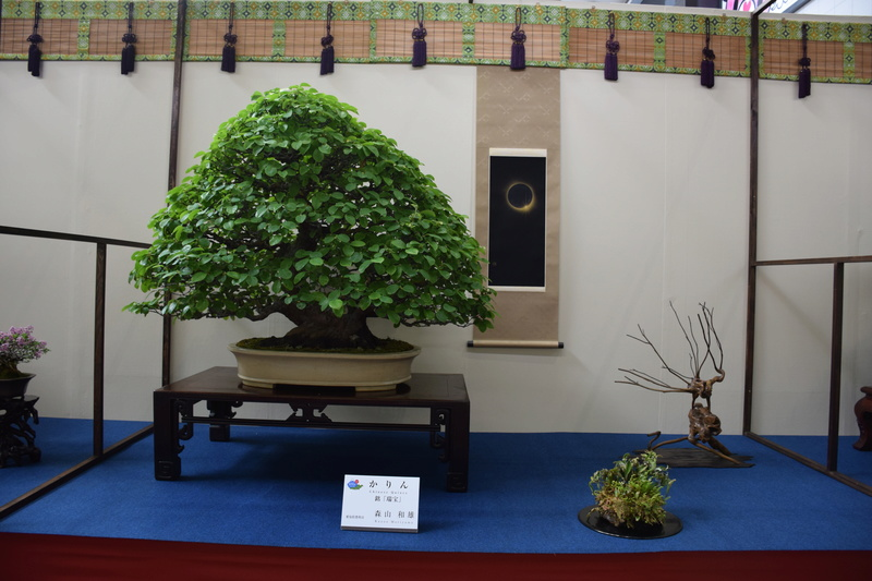 The 8th World Bonsai Convention, SAITAMA CITY - Page 2 Dsc_0689