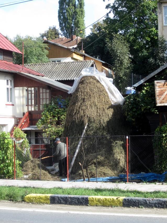 Voyage de Lucuts en Roumanie (31e)  13100314