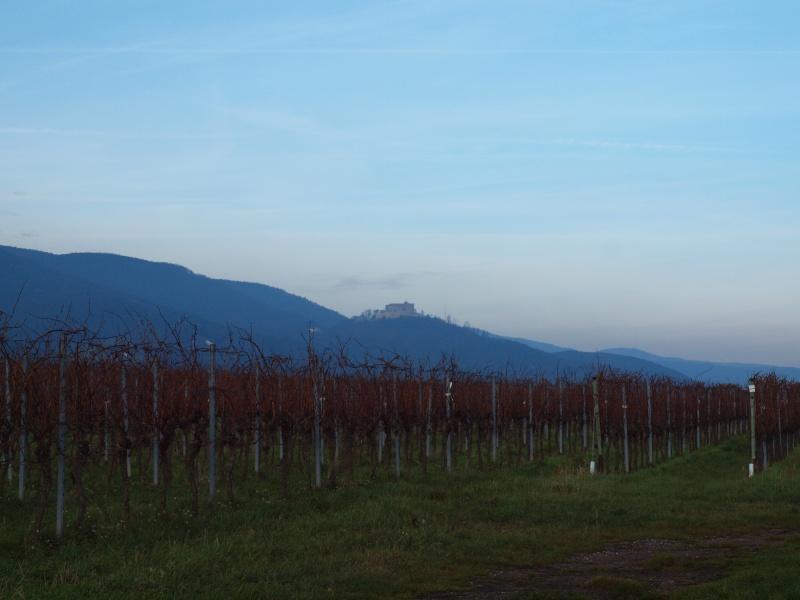 dans les vignes Pc311010