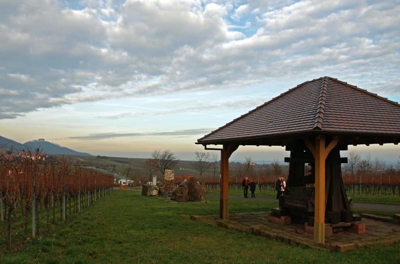 dans les vignes Pc311113