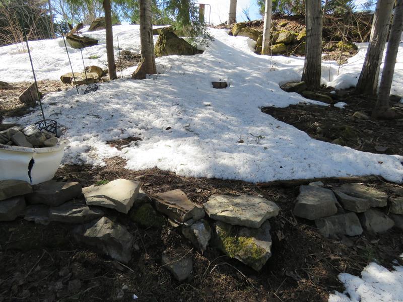 Vivaces alpines Img_0345
