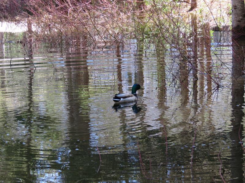 Mes canards sont de retour Img_1310