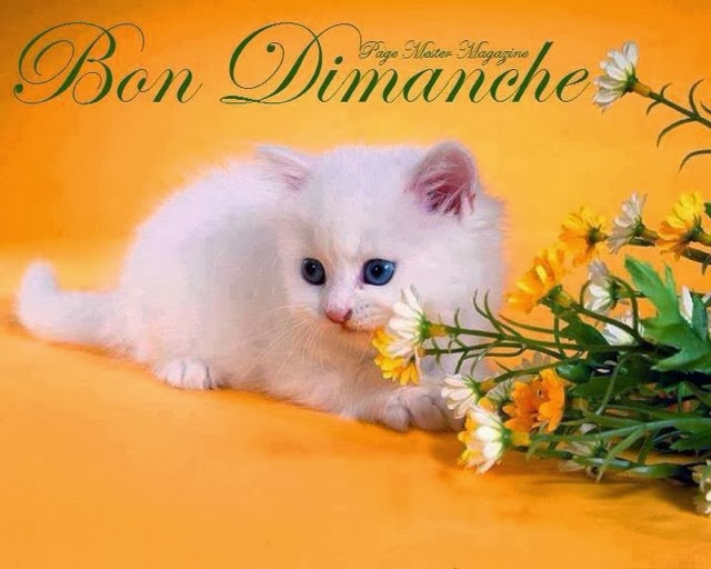 Bonjour - Page 38 A_bon_10