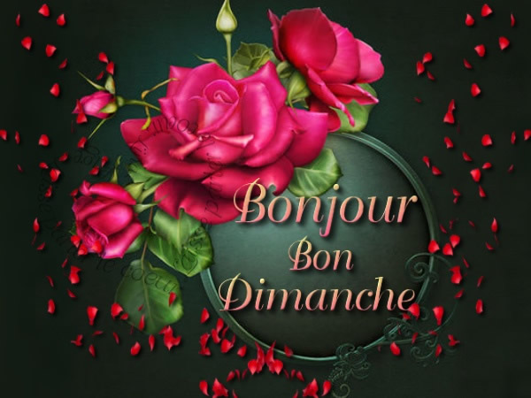 Bonjour - Page 2 Dimanc11