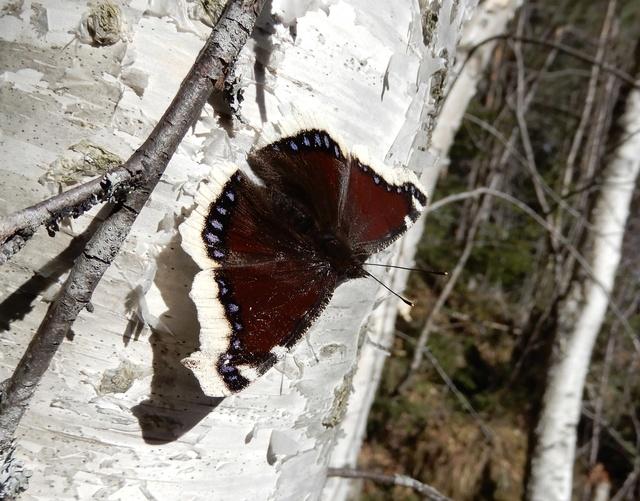 Vlindertjes ! Dscn2411