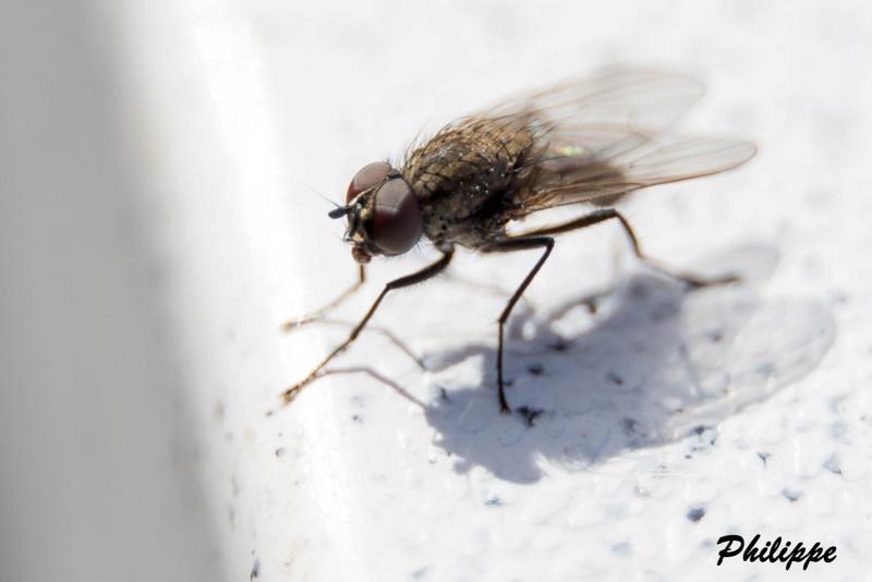 Insectes 718a3210