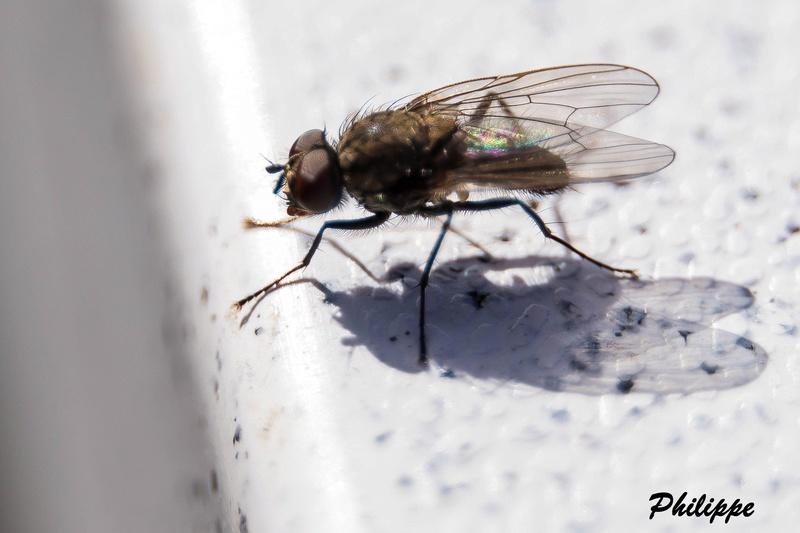 Insectes 718a3211