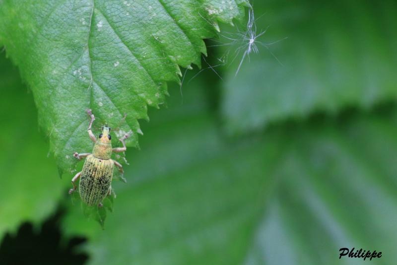 Insectes 718a3214