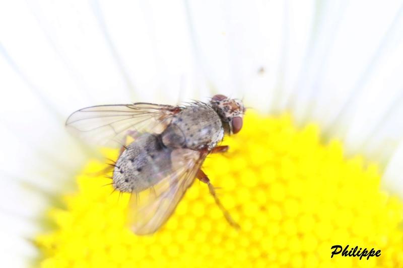 Insectes 718a3310