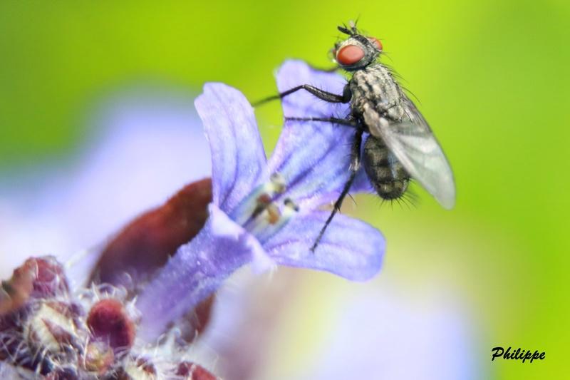 Insectes 718a3311