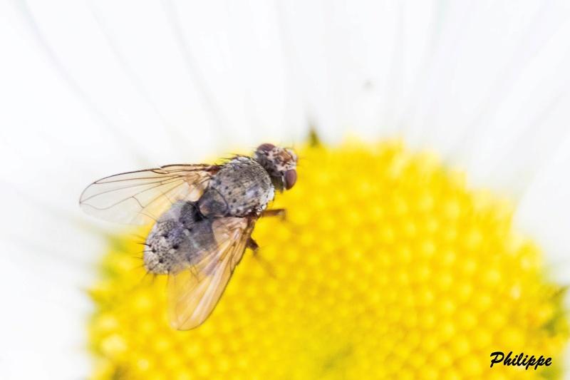 Insectes 718a3312