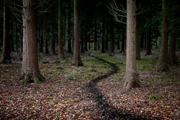 Jean Hegland Chemin10