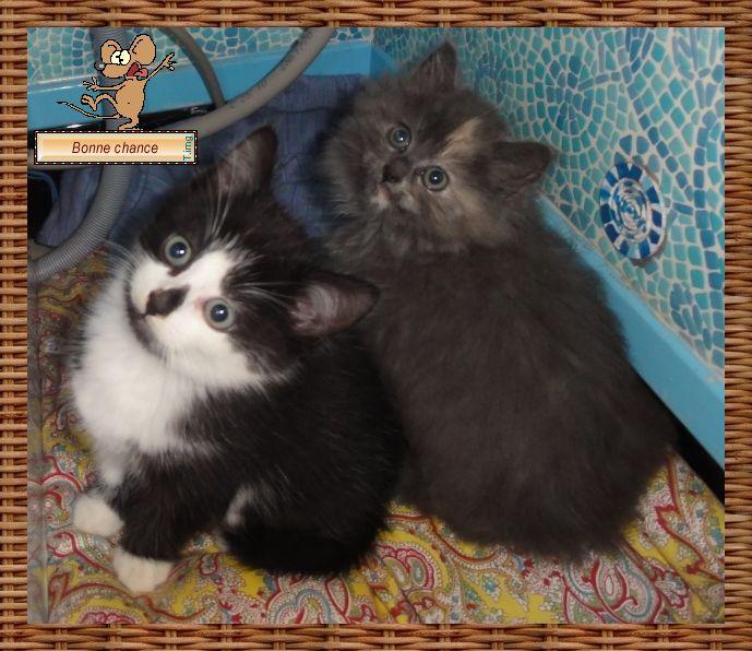 Photos de chats petits et que Dsc09710