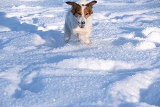 Adoption d'un chien via une association autre que la SPA - Page 2 16559310