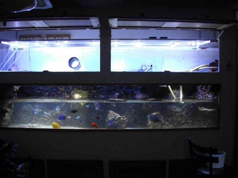 Thalassianthus aster (chantier vidage du 1500 & 500 litres!) 11-03_10