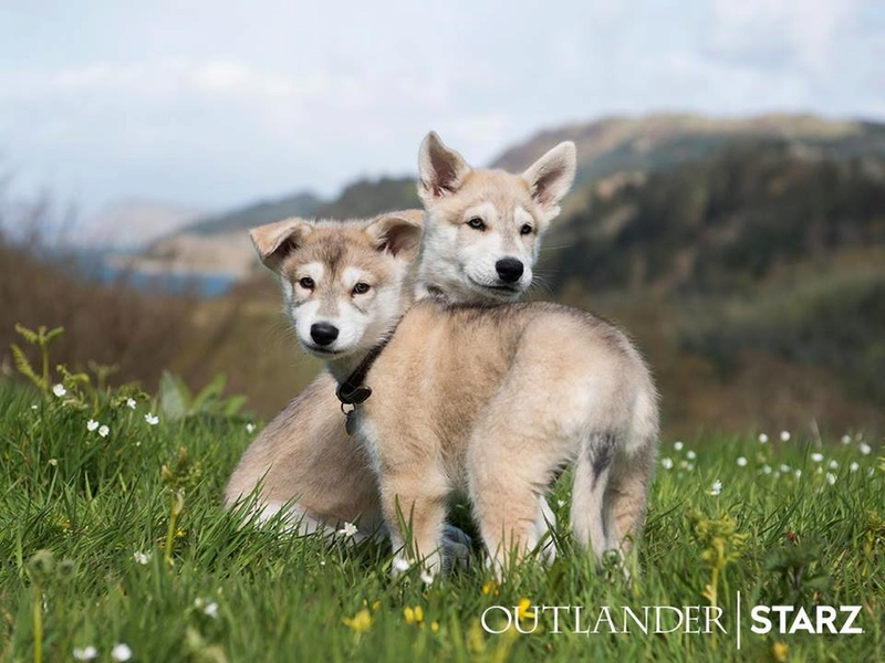 Outlander 18194010