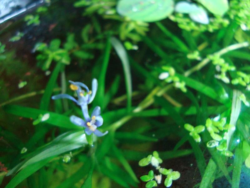 Mes plantes et fleurs Dsc03911