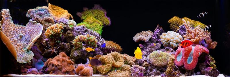 Bacs à coraux mous 75_1aq10