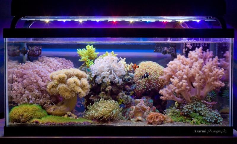 Bacs à coraux mous Reef-210