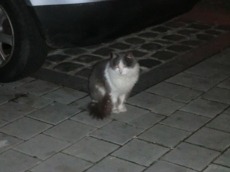 2 chats poils longs  plus 1en urgence recherchent FA Grisou10