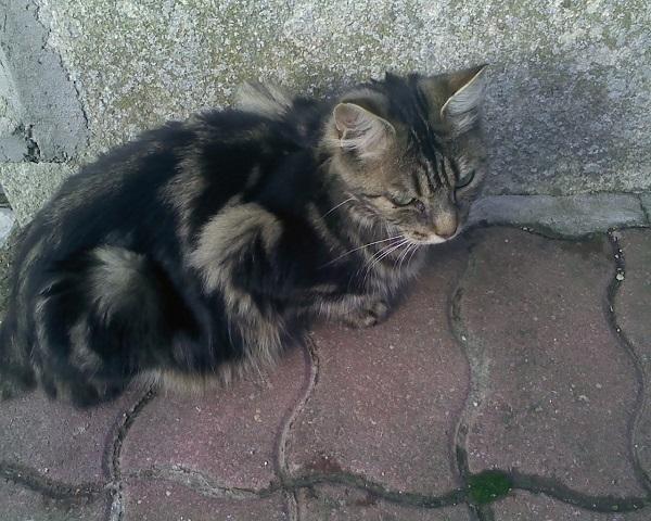 2 chats poils longs  plus 1en urgence recherchent FA Mere1111