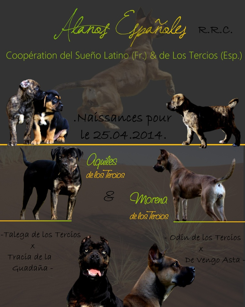 Chiots alanos Espagnols LOE/RRC Annonc10