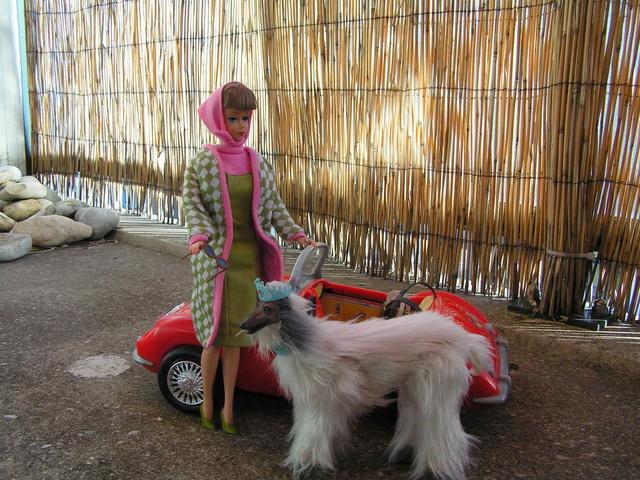 Poodle Parade repro Poodle10