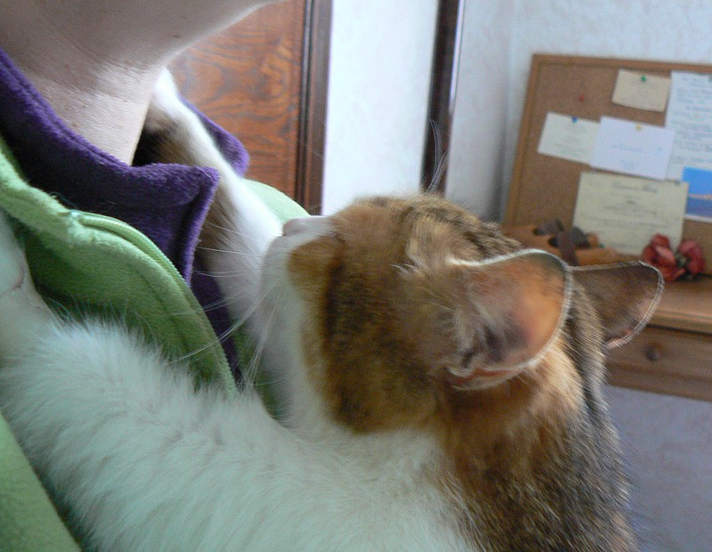 Fifi (Joséphine) adorable minette à Limoges Fifi111