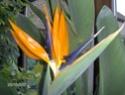Après les orchidées, les hirondelles, mes plantes d'intérieur.... - Page 4 Hpim1615