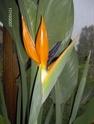 Après les orchidées, les hirondelles, mes plantes d'intérieur.... - Page 4 Hpim1616