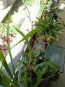 Après les orchidées, les hirondelles, mes plantes d'intérieur.... - Page 4 P7290414
