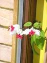 Après les orchidées, les hirondelles, mes plantes d'intérieur.... - Page 4 P7290415